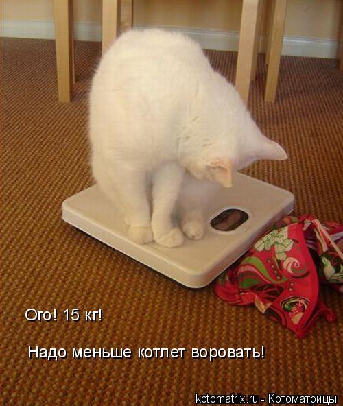 Котоматрица: Надо меньше котлет воровать! Ого! 15 кг!