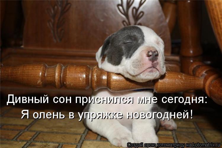http://kotomatrix.ru/images/lolz/2010/11/30/752878.jpg