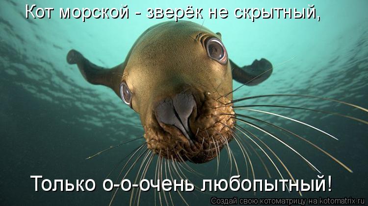 Котоматрица: Кот морской - зверёк не скрытный, Только о-о-очень любопытный!