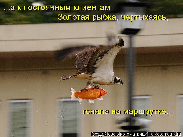 Котоматрица: ...а к постоянным клиентам Золотая рыбка, чертыхаясь, гоняла на маршрутке...