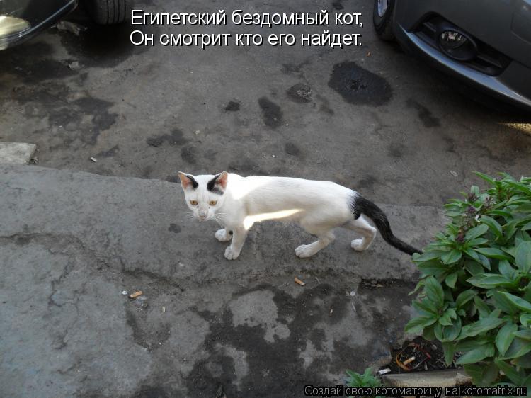 Котоматрица: Египетский бездомный кот, Он смотрит кто его найдет.