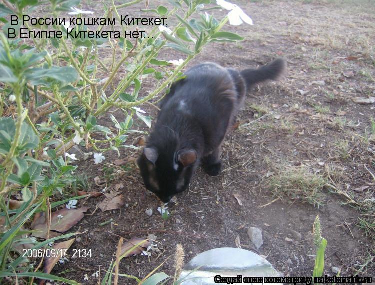 Котоматрица: В России кошкам Китекет, В Египле Китекета нет...
