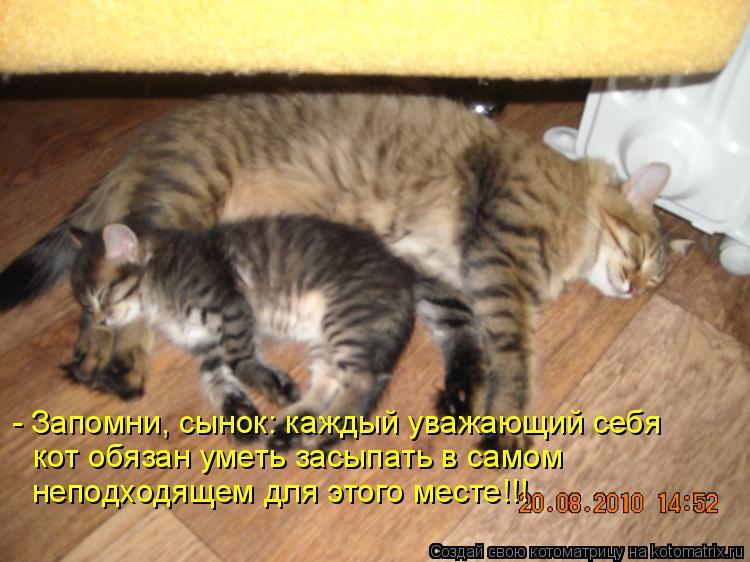 - Запомни, сынок: каждый уважающий себя кот обязан уметь засыпать в са