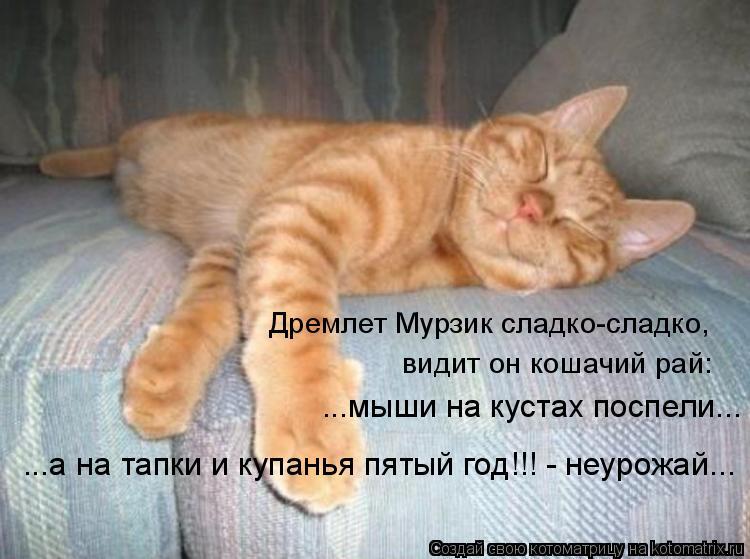 Котоматрица: Дремлет Мурзик сладко-сладко, видит он кошачий рай: ...мыши на кустах поспели... ...а на тапки и купанья пятый год!!! - неурожай...