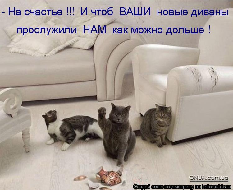 Котоматрица: - На счастье !!!  И чтоб  ВАШИ  новые диваны прослужили  НАМ  как можно дольше !