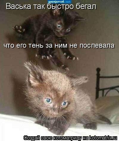 Котоматрица: Васька так быстро бегал что его тень за ним не поспевала