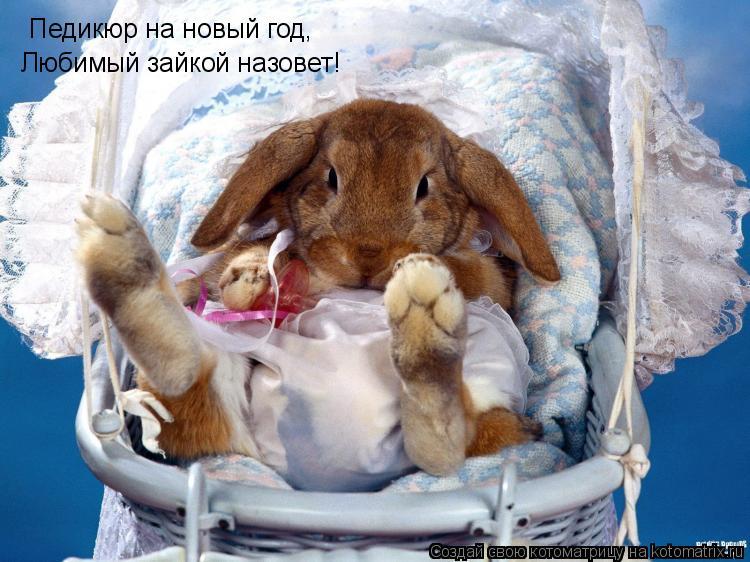 Котоматрица: Педикюр на новый год, Любимый зайкой назовет!