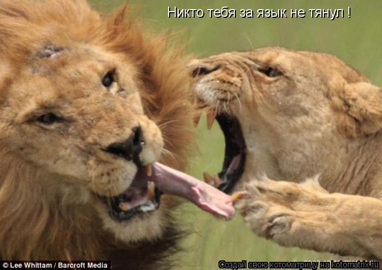 Котоматрица: Никто тебя за язык не тянул !