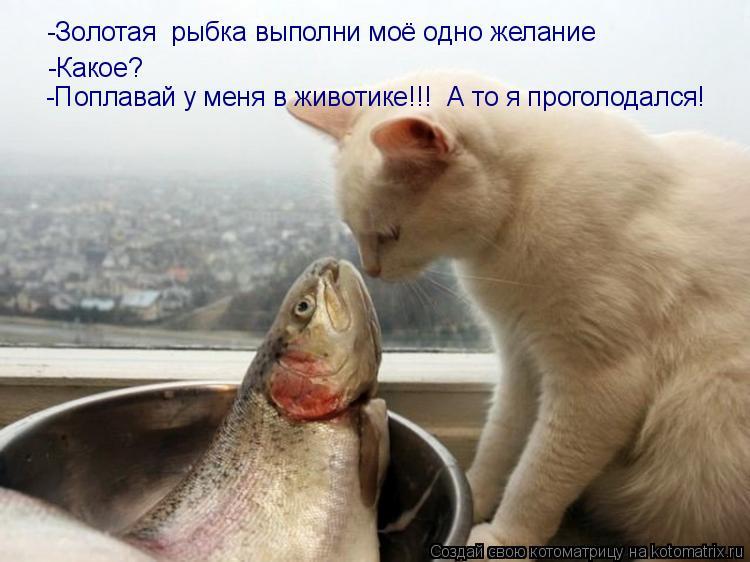 Котоматрица: -Золотая  рыбка выполни моё одно желание -Какое? -Поплавай у меня в животике!!!  А то я проголодался!