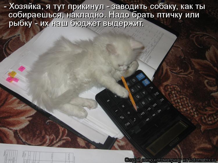 Котоматрица: - Хозяйка, я тут прикинул - заводить собаку, как ты  собираешься, накладно. Надо брать птичку или  рыбку - их наш бюджет выдержит.