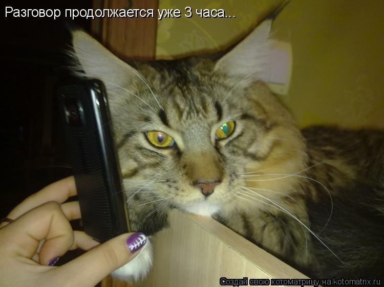 Котоматрица: Разговор продолжается уже 3 часа...