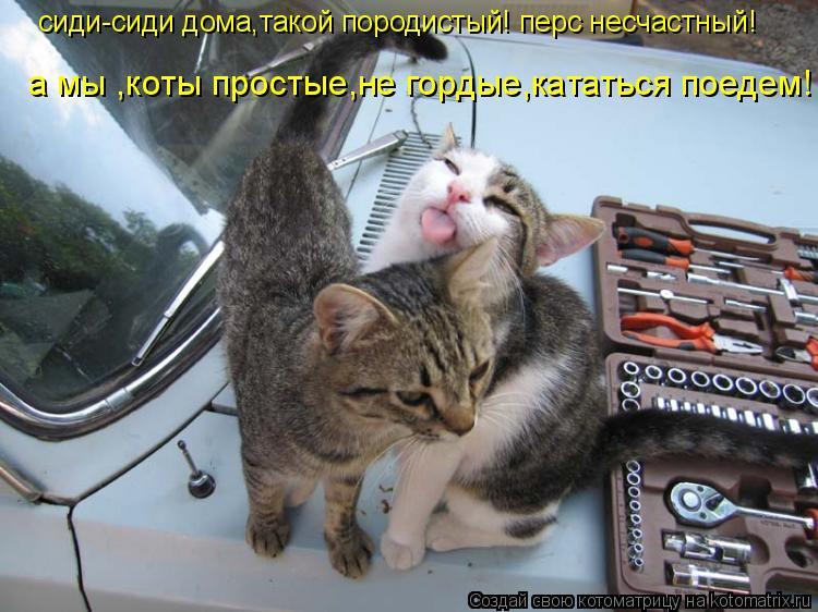 Котоматрица: сиди-сиди дома,такой породистый! перс несчастный!  а мы ,коты простые,не гордые,кататься поедем! ! !