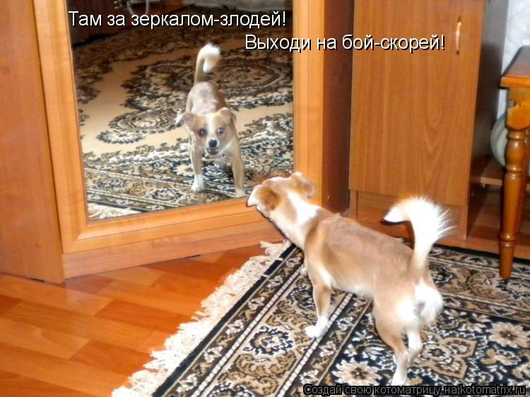 Котоматрица: Там за зеркалом-злодей! Выходи на бой-скорей!