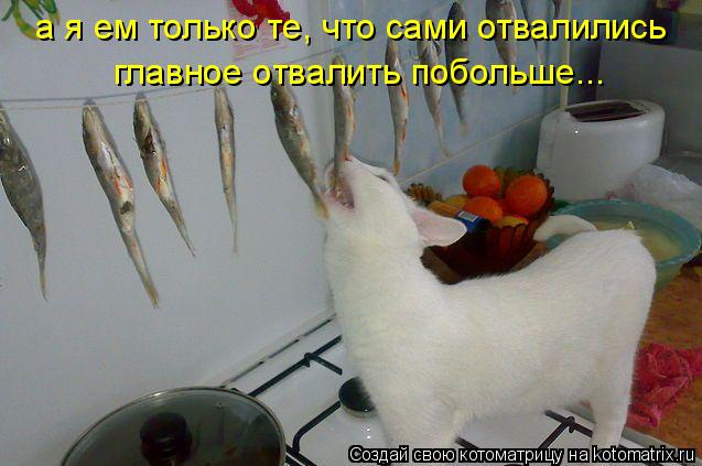 Котоматрица: а я ем только те, что сами отвалились главное отвалить побольше...