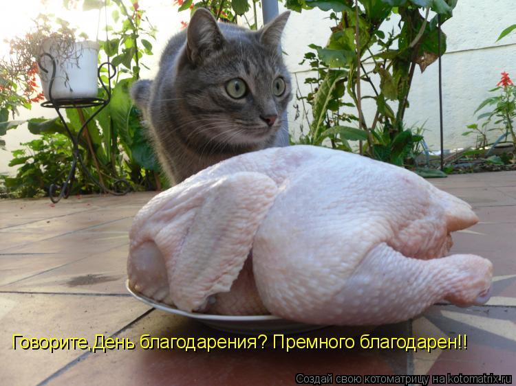 Говорите,День благодарения? Премного благодарен!!