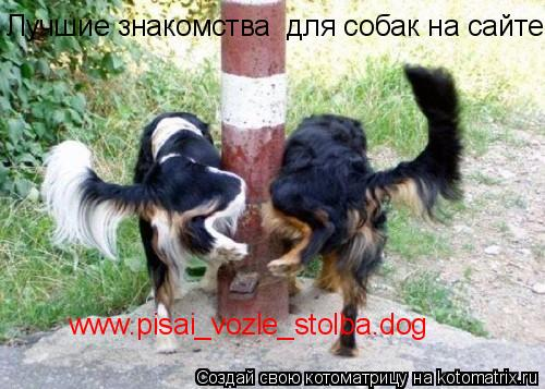 Котоматрица: www.pisai_vozle_stolba.dog Лучшие знакомства  для собак на сайте: