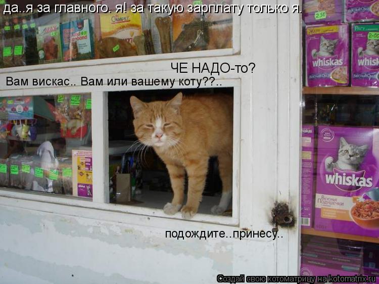 Котоматрица: да..я за главного. я! за такую зарплату только я. ЧЕ НАДО-то? Вам вискас.. Вам или вашему коту??..  подождите..принесу..