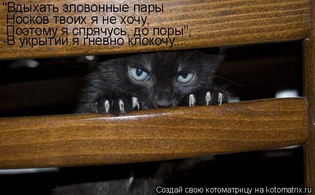 """Котоматрица: """"Вдыхать зловонные пары Носков твоих я не хочу , Поэтому я спрячусь, до поры"""", -В укрытии я гневно клокочу..."""