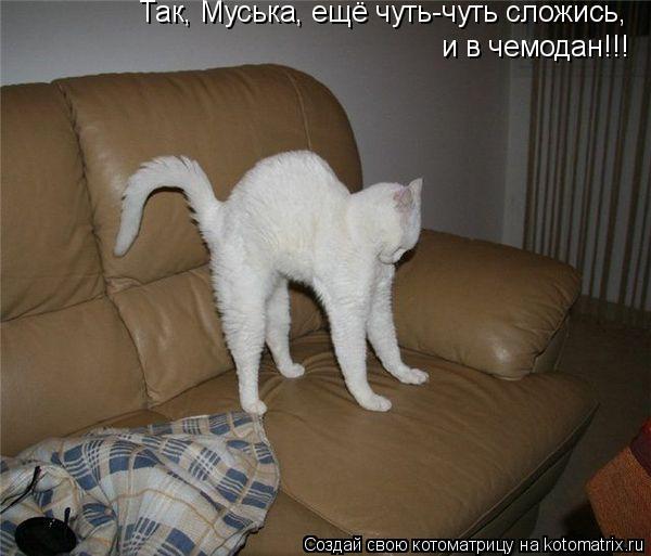 Котоматрица: Так, Муська, ещё чуть-чуть сложись, и в чемодан!!!