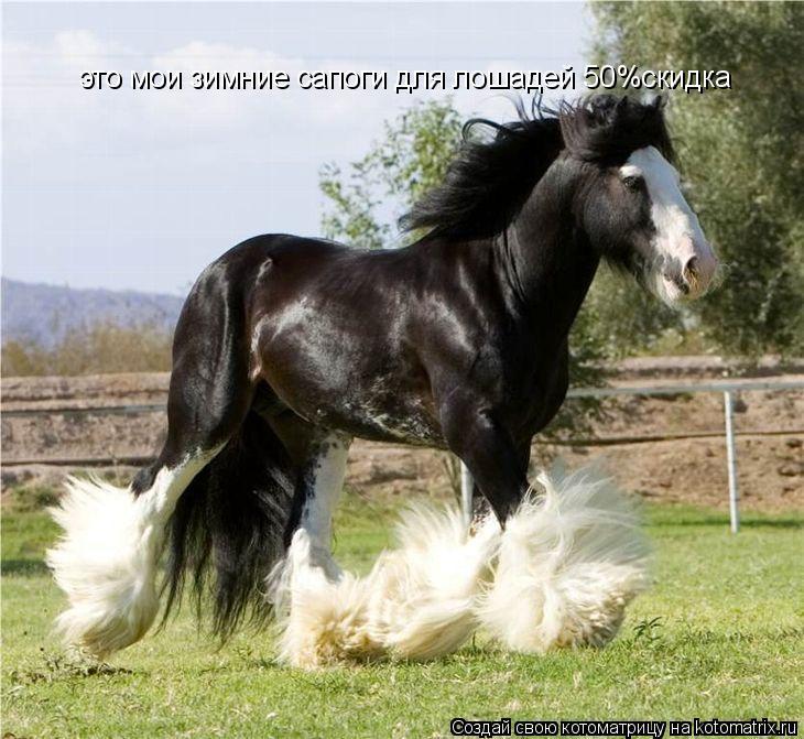 Котоматрица: это мои зимние сапоги для лошадей 50%скидка