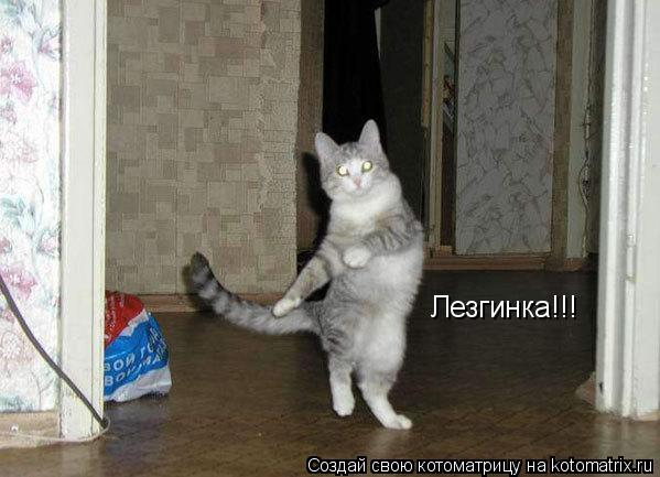 Котоматрица: Лезгинка!!!