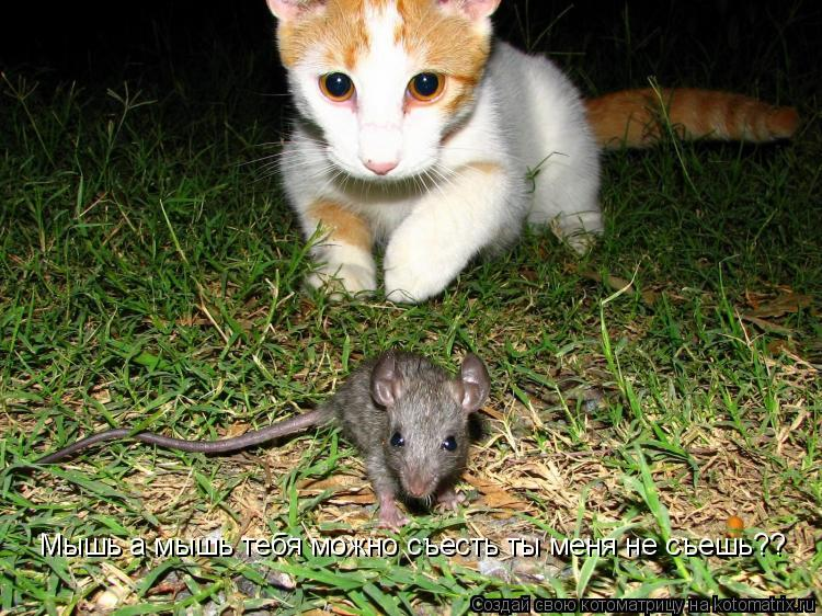 Котоматрица: Мышь а мышь тебя можно съесть ты меня не съешь??