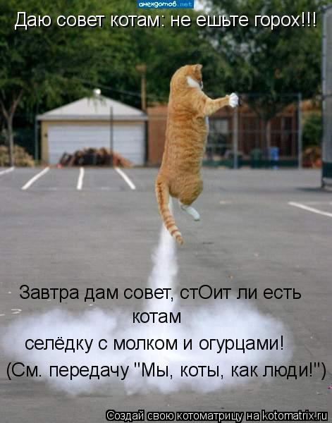 """Котоматрица: Завтра дам совет, стОит ли есть селёдку с молком и огурцами! котам Даю совет котам: не ешьте горох!!! (См. передачу """"Мы, коты, как люди!"""")"""