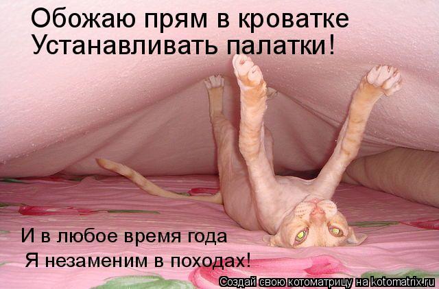 Котоматрица - Обожаю прям в кроватке Устанавливать палатки! И в любое время года Я н