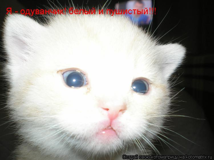 Котоматрица: Я - одуванчик! белый и пушистый!!! Я - одуванчик! белый и пушистый!!!