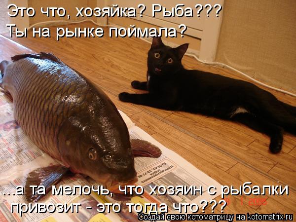 Котоматрица: Это что, хозяйка? Рыба???  Ты на рынке поймала? ...а та мелочь, что хозяин с рыбалки  привозит - это тогда что???