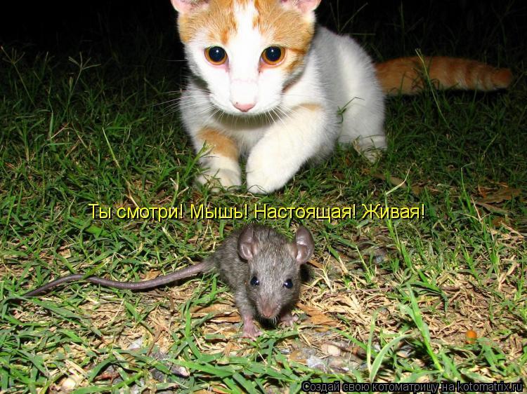 Котоматрица: Ты смотри! Мышь! Настоящая! Живая!
