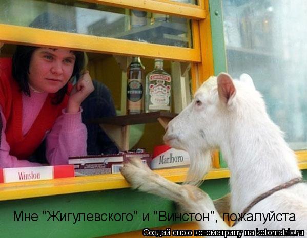 """Котоматрица: Мне """"Жигулевского"""" и """"Винстон"""", пожалуйста"""