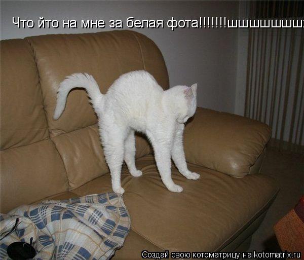 Котоматрица: Что йто на мне за белая фота!!!!!!!шшшшшшшххххх