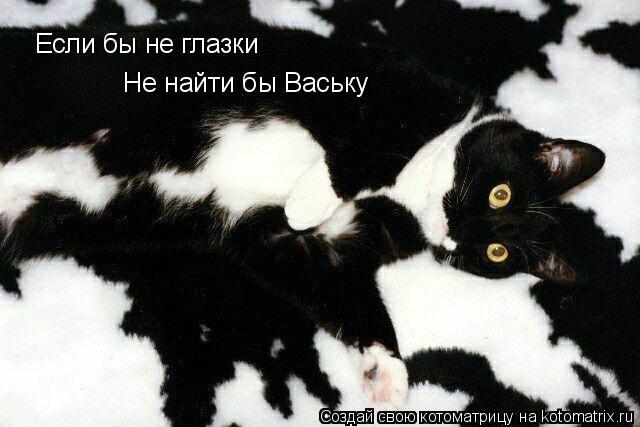 Котоматрица: Если бы не глазки Не найти бы Ваську