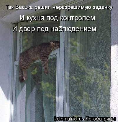 Котоматрица: Так Васька решил неразрешимую задачку И кухня под контролем И двор под наблюдением