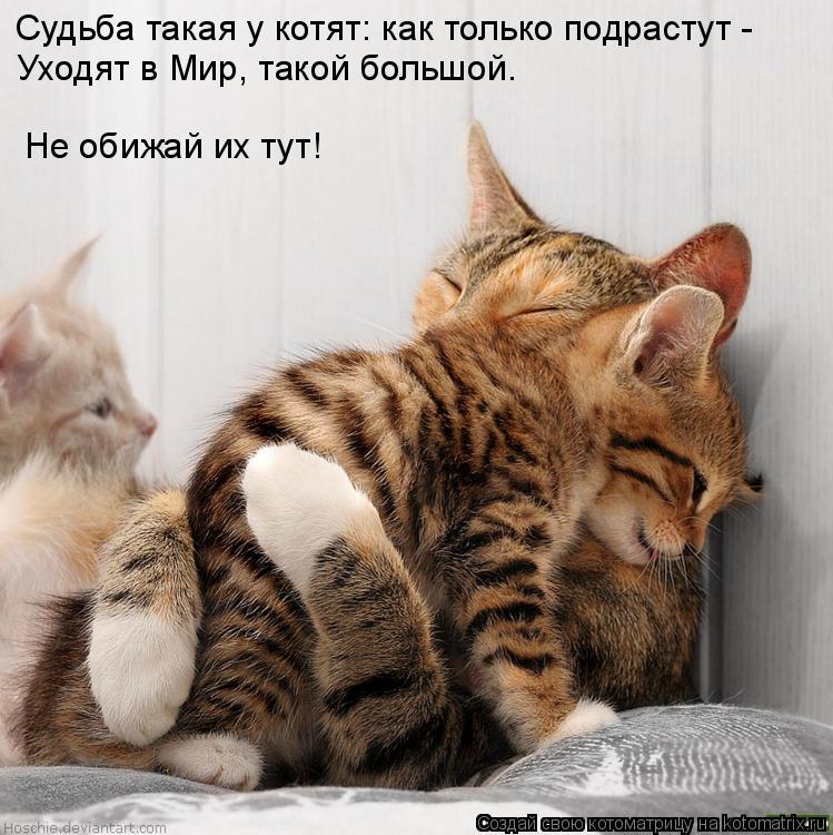 [котята]