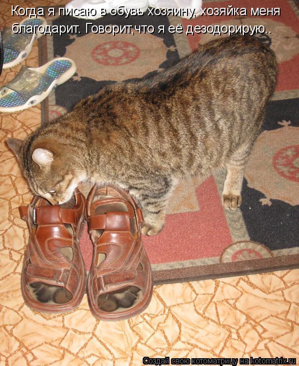 Котоматрица - Когда я писаю в обувь хозяину, хозяйка меня благодарит. Говорит,что я