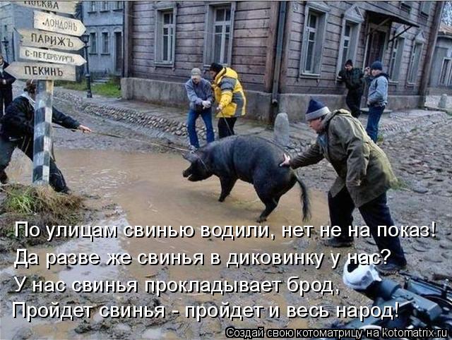 Котоматрица: По улицам свинью водили, нет не на показ! Да разве же свинья в диковинку у нас? У нас свинья прокладывает брод, Пройдет свинья - пройдет и весь