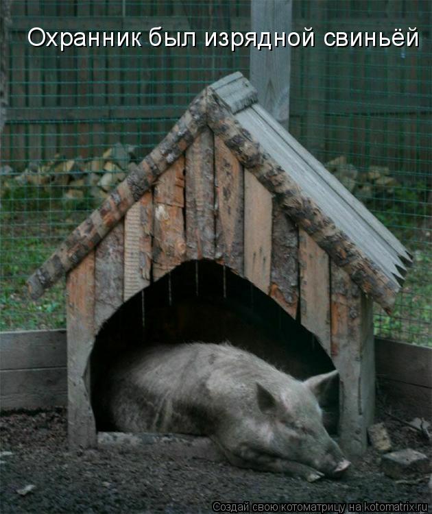 Охранник был изрядной свиньёй