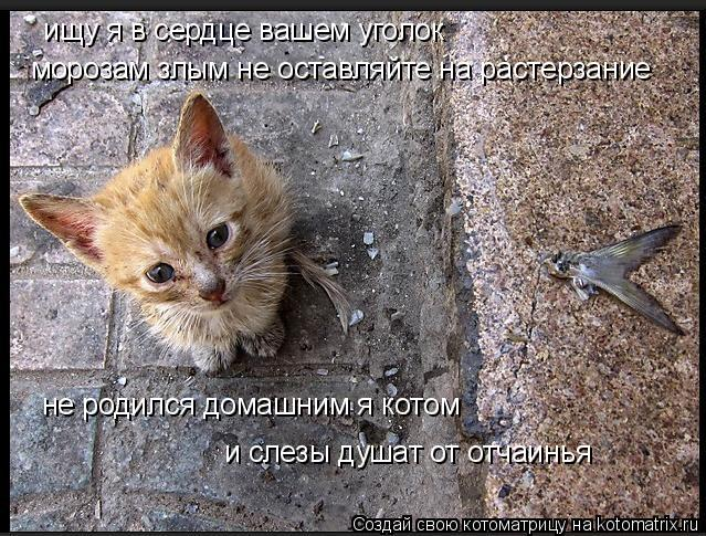 Котоматрица: ищу я в сердце вашем уголок  морозам злым не оставляйте на растерзание не родился домашним я котом и слезы душат от отчаинья