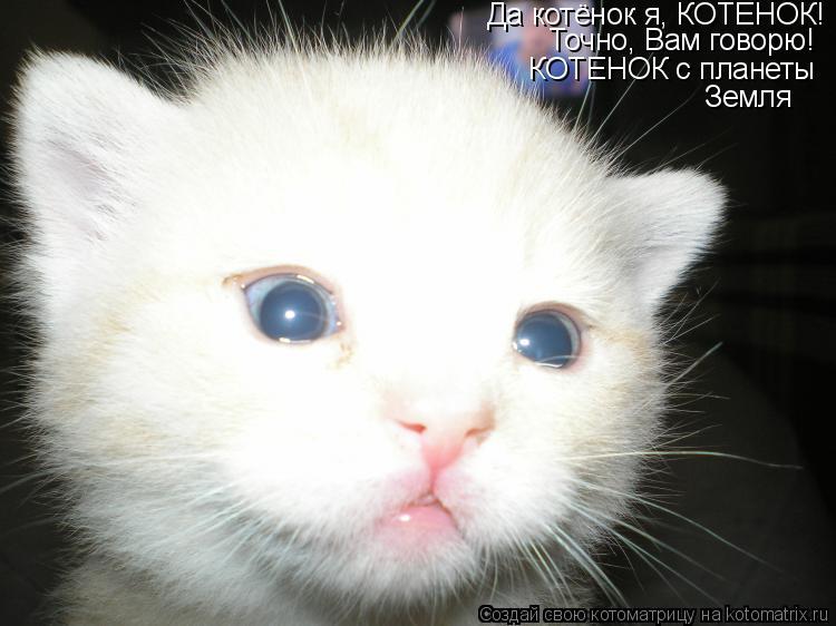 Котоматрица: Да котёнок я, КОТЕНОК!  Точно, Вам говорю! КОТЕНОК с планеты Земля