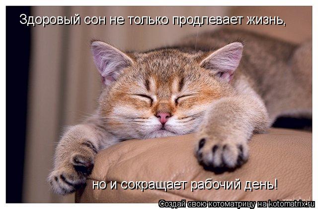 Котоматрица: Здоровый сон не только продлевает жизнь, но и сокращает рабочий день!