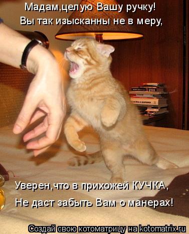 Котоматрица: Мадам,целую Вашу ручку! Вы так изысканны не в меру, Уверен,что в прихожей КУЧКА, Не даст забыть Вам о манерах!