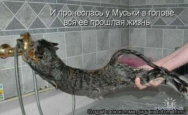 Котоматрица: И пронеслась у Муськи в голове вся ее прошлая жизнь
