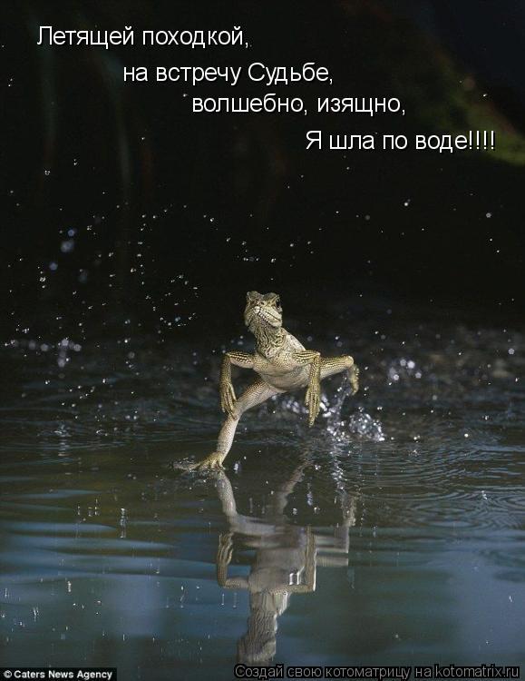 Котоматрица: Летящей походкой,  на встречу Судьбе, волшебно, изящно, Я шла по воде!!!!