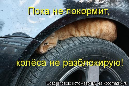 Котоматрица: Пока не покормит,  колёса не разблокирую!