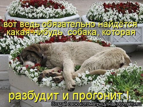 Котоматрица: вот ведь обязательно найдётся какая-нибудь  собака, которая разбудит и прогонит !