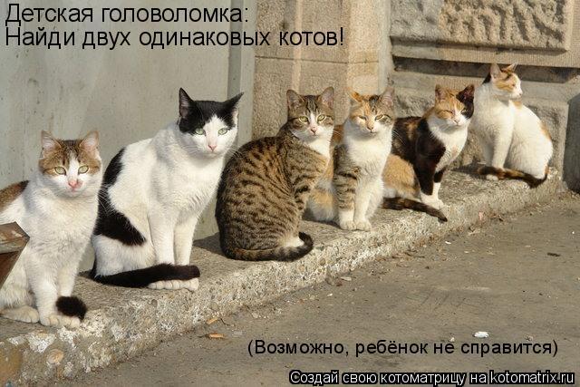 Котоматрица: Детская головоломка: Найди двух одинаковых котов! (Возможно, ребёнок не справится)