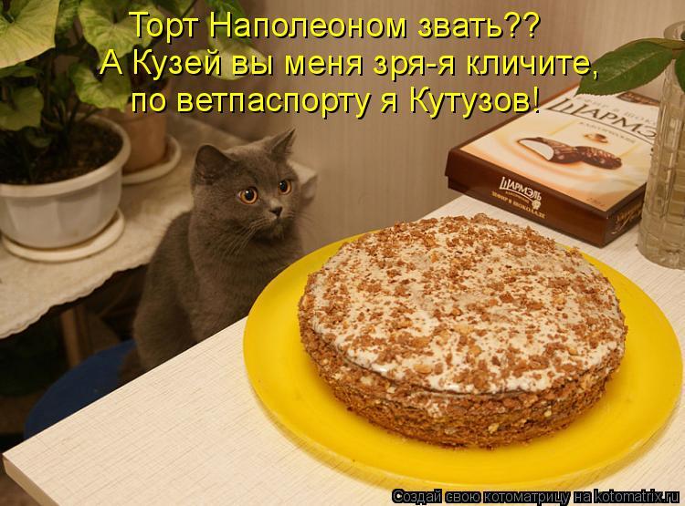 Котоматрица: Торт Наполеоном звать?? А Кузей вы меня зря-я кличите, по ветпаспорту я Кутузов!