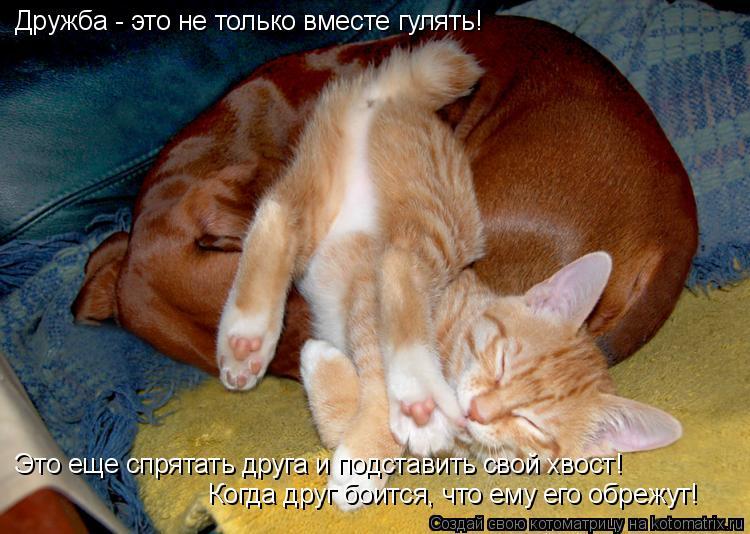 Котоматрица: Дружба - это не только вместе гулять! Это еще спрятать друга и подставить свой хвост!  Когда друг боится, что ему его обрежут!
